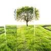 Come alberi che camminano