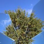 albero-frammento_IMG_7850