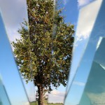 albero-frammento_IMG_7901