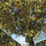 albero-frammento_IMG_7932