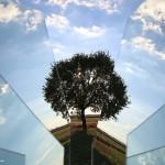 albero-frammento_IMG_7972