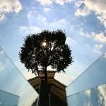 albero-frammento_IMG_7979