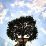 albero-frammento_IMG_7992
